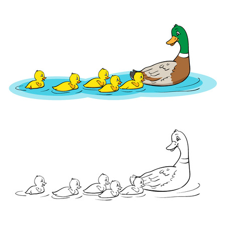 Coloring book or page. Mother duck and ducklings. Mallard duck and baby ducklings.