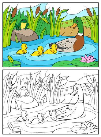 pato caricatura: Libro para colorear o ilustración de dibujos animados página. Madre de pato y patitos con rana. Pato y el bebé patos Mallard. Vectores