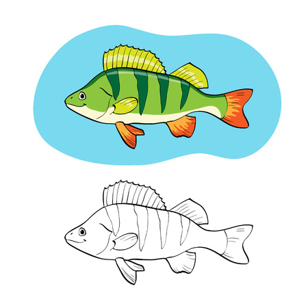 perch: Coloring book or page. Illustration with fish perch.