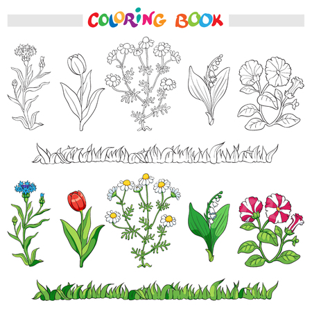 petunia: Coloring book or page with flower cornflower, daisy, tulip, lily of the valley, and petunia.. Vector illustration. Illustration
