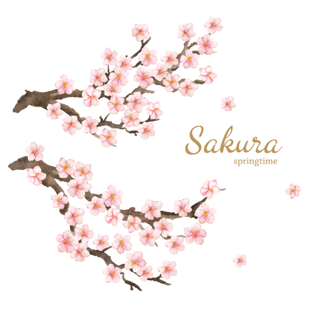 Vector watercolor elements. Sakura flowers and branches. Hand drawn illustration isolated on white background.  イラスト・ベクター素材