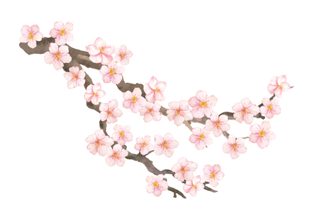 Vector watercolor elements. Sakura flowers and branch. Hand drawn illustration isolated on white background. 写真素材