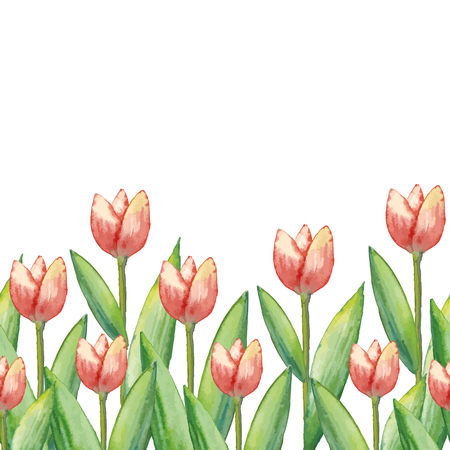 Watercolor tulips, hand drawn illustration of spring flowers, floral horizontal illustration isolated on white background.