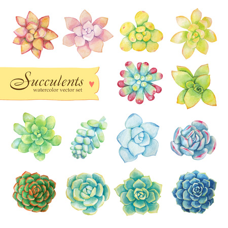 Vector set of floral elements in a watercolor style. Succulents painted in watercolor. Elements for design of invitations, movie posters, fabrics and other objects.