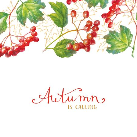 Vector Red viburnum opulus  branch with leaves and berries - autumn greeting card. 일러스트