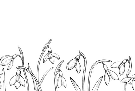 Vector spring seamless border with hand drawn snowdrops on white background.