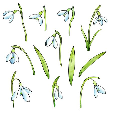 Vector snowdrops set. Hand drawn snowdrops flowers on white background. Spring watercolor flowers Illusztráció