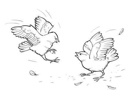 Vector illustration of two angry sparrows. Birds fight on white background. Coloring page Illusztráció