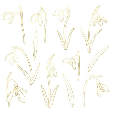 Vector golden snowdrops set. Hand drawn snowdrops flowers on white background. Spring flowers