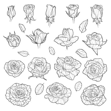 Vector set of roses. Black hand-drawn flowers isolated on white background. Can use for wedding invitations, greeting cards or coloring Illusztráció
