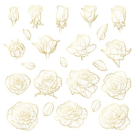 Vector set of roses. Golden hand-drawn flowers cutout on white background. Can use for wedding invitations, greeting cards Illusztráció
