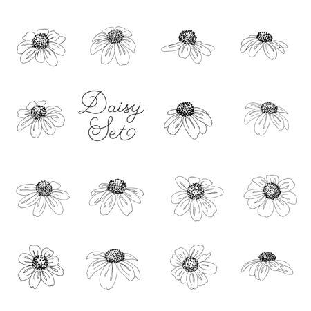 Set of daisy flowers in line style isolated on white background. Ilustrace