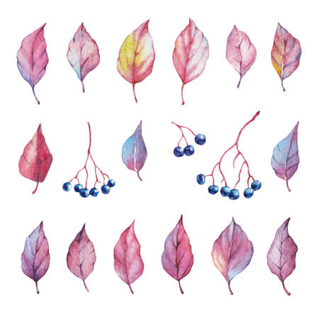 Vector Set of red autumn watercolor elements - berries and leaf. Collection garden, wild foliage. Illustration isolated on white background.