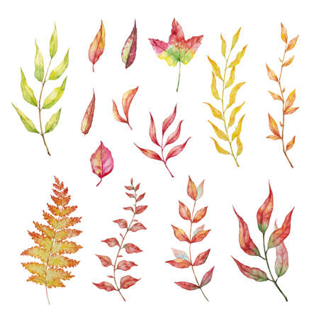 Vector Set of red autumn watercolor elements - berries and leaf. Collection garden, wild foliage and branches. Illustration isolated on white background.