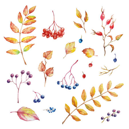 Vector Set of red autumn watercolor elements - berries and leaves. Collection garden, wild foliage and branches. Illustration isolated on white background.