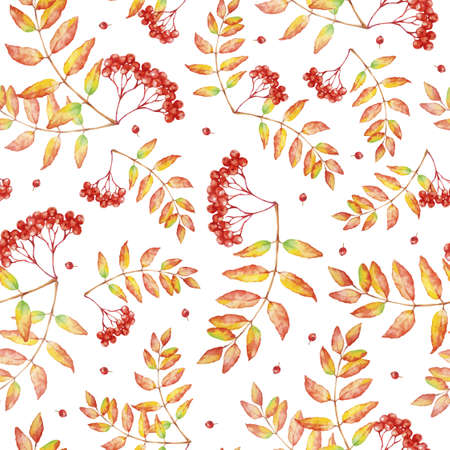 Vector watercolor seamless pattern with rowan autumn leaves and berries. Ilustrace