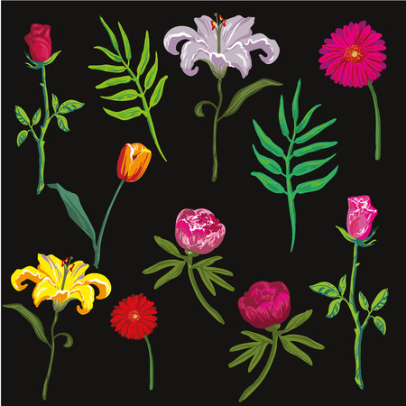 collection of colorful flowers. Vector illustration. Illustration