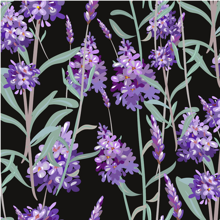 Vector pattern with Lavender. Hand painting. Seamless texture for fabric, paper print wrapping, black background