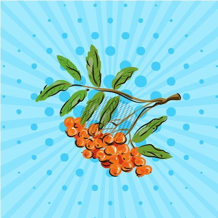 Bunch rowan berries on blue background vector illustration. Hand drawn on style pop art. Illustration
