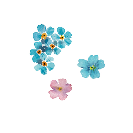 Forget-me-not flowers isolated on white background. watercolor hand drawn illustration. Stock Photo