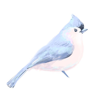 Bird vector watercolor isolated on white background.