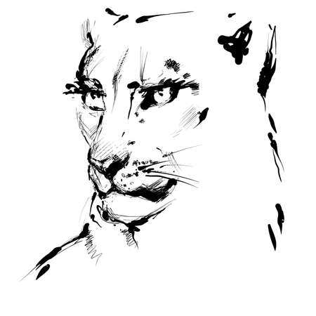 Lioness black and white drawing, vector hand drawn sketch