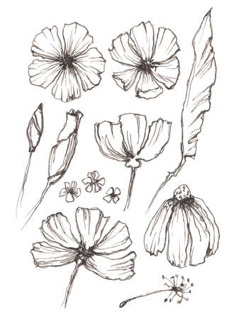 Set of linear drawing herbs and flowers, vector illustration