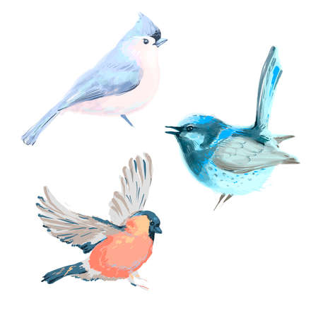 Vector illustration of three different birds isolated on white 向量圖像