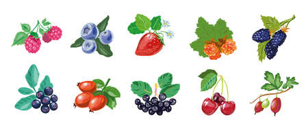 Berry collection hand drawn realistic style, berries set isolated on white