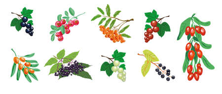 Berry set vector, medical berries collection isolated on white