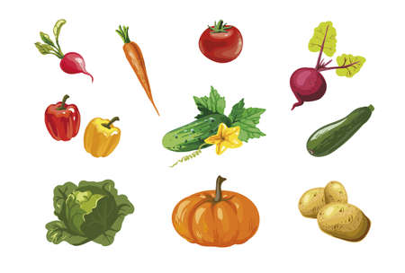 Vegetable hand drawn vector collection 向量圖像