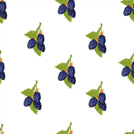 Blackberry with leaves vector pattern isolated on white
