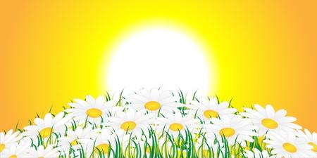 rising sun: Flores blancas contra un sol naciente