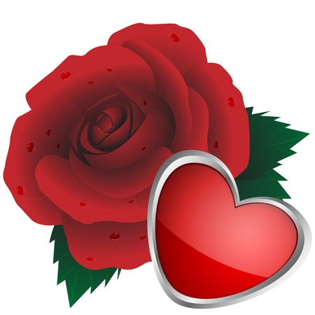 blossomed: Rose of red color and  heart on a white background Illustration