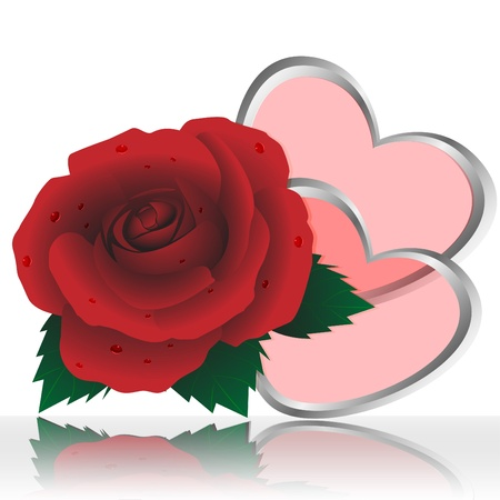 blossomed: Two hearts and rose of red color on a white background