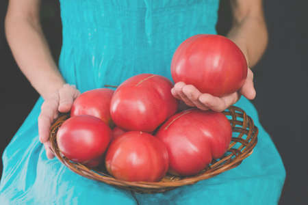 Harvest of a very large farmers tomatoes in a woven wooden plate in the hands of a young woman
