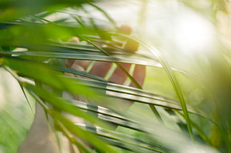 Woman hand  touches and enjoy green palm leaves lit by the sun. Concept tenderness, interaction, unity with nature.