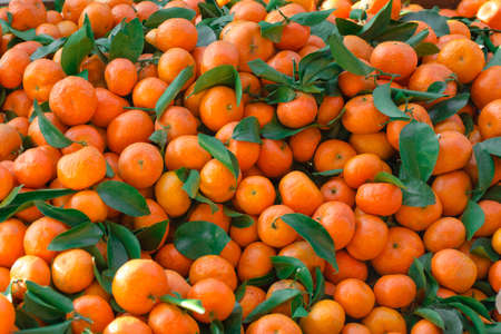 Mandarins with green leaves scattered dense layer. Natural fruit background pattern.