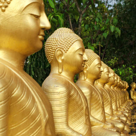 Buddha statues are covered in gold, arranged in a row, garden with green trees. Concept of rebirth, reincarnation, eternal life. Sri Lanka. Empty place for text, copy space.