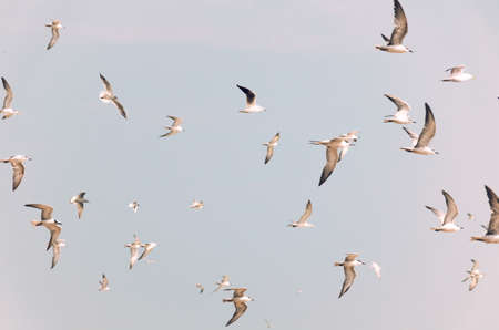 Group of birds flying, toned in vintage pale colors. Flock of white birds.