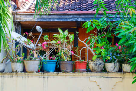 Flower pots in a row stand on the fence. Decoration of the yard. Home courtyard decor in Asia. Bali, Indonesia