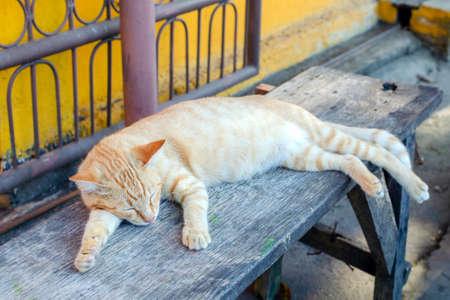 Homeless ginger cat sleeps on a bench Reklamní fotografie