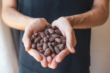 Farmer man hands hold roasted fragrant cocoa beans. . Cocoa is an antioxidant, antidepressant, a source of magnesium and other trace elements.