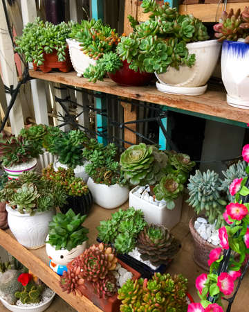 Collection of succulents flowers in pots on a wooden shelf.