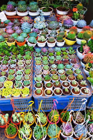 Variety of miniature succulents in pots. Top view on a box with flowers. A selection of plants that are easy to care for 免版税图像