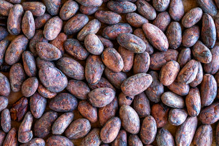 Background pattern of fried cocoa beans. Fragrant Organic Cocoa For Making Chocolate