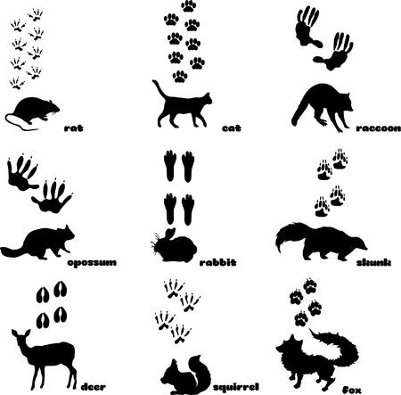 Animal Footprint Track Vector on plain background. Ilustracja