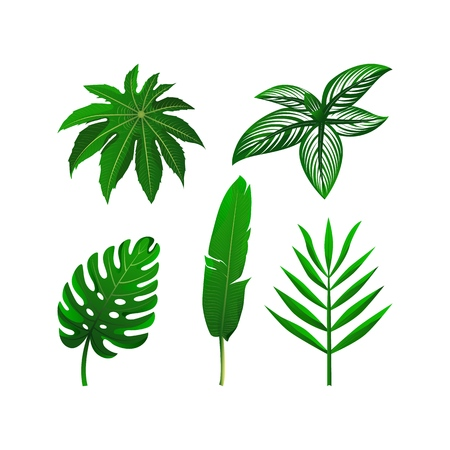 Set of tropical green leaves. Vector illustration collection. isolated elements on the white background. Decorative elements.
