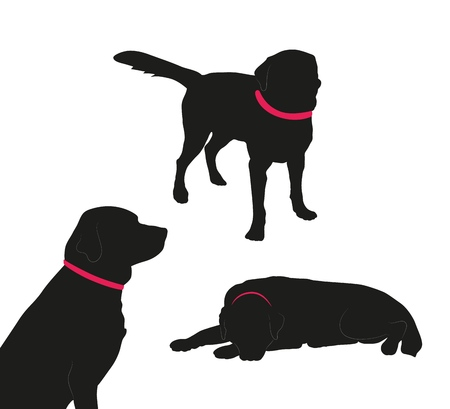 Set of black silhouette of big dog with collar on white background. Collection various forms, pose. Lies, sits, plays,walks, stand. Elements for design, pet shop, food for animals. Vector illustration Ilustração