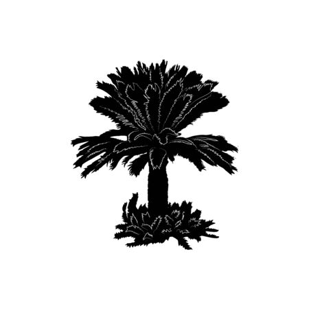 Tropical palm tree, black silhouette on white background. Element for design. Nature icon. isolated object.Vector illustration.